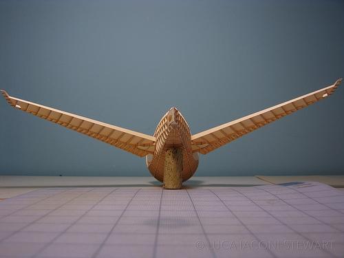 Boeing 777's tail. Photo: Luca Iaconi-Stewart